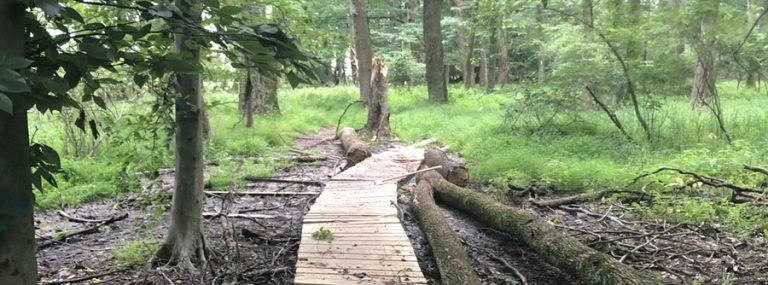 wetlands walkway project